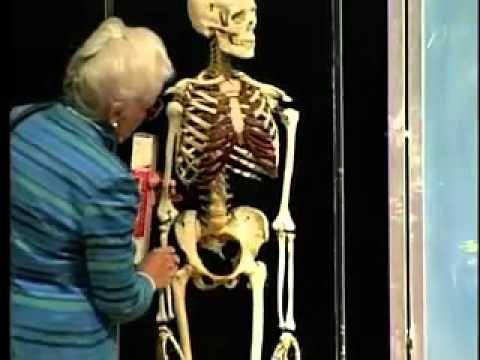 Saylor BIO302: Skeletal System Lecture 5