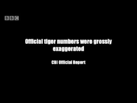 Poaching cover up - Battle to save the tiger - BBC wildlife & animals
