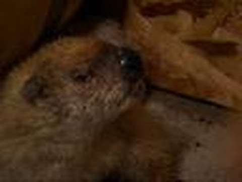 Groundhog Loves Wine | Call of the Wildman