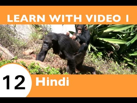 Learn Hindi with Video - It's a Jungle Out There: Let HindiPod101.com Show You an Easier Way!