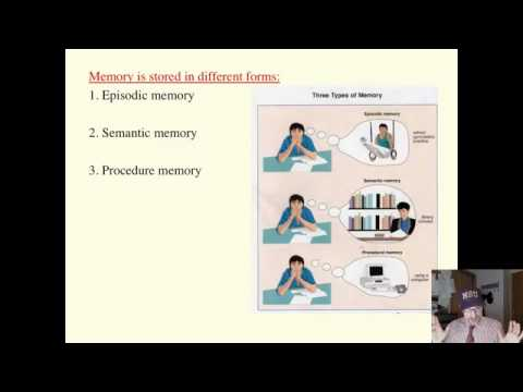 Saylor PSYCH303: Information Processing Long Term Memory