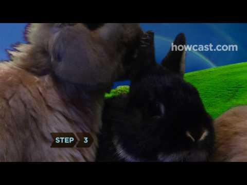 How to Make Bunny Ears