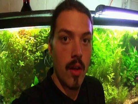 Me Planting My 125 Gallon Planted Aquarium