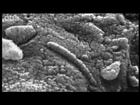 Evidence of a tiny fossilised Martian?  - Life on Mars - BBC Horizon