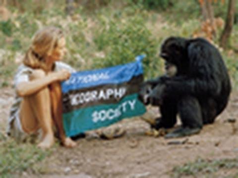 Jane Goodall: A Retrospective