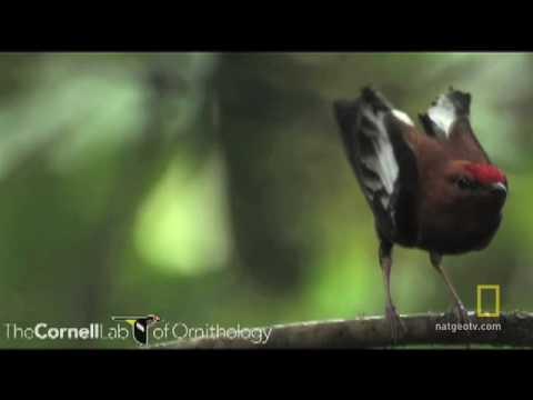 Bird Feathers Sing