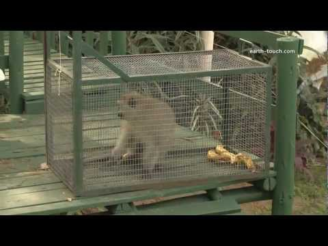 Dogs attack monkey | District Monkey Episode 3