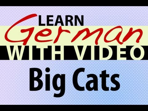 Learn German with Video - Big Cats