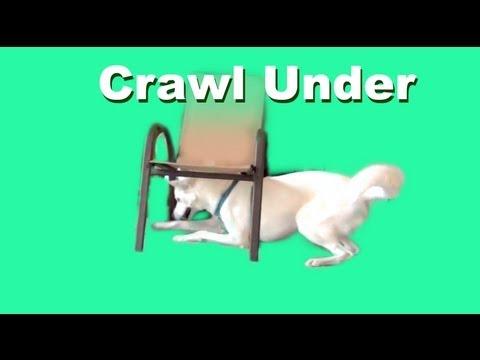 Clicker Dog Training- Crawl Under