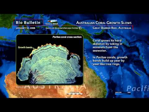 Science Bulletins: Australia's Coral Growth Slows