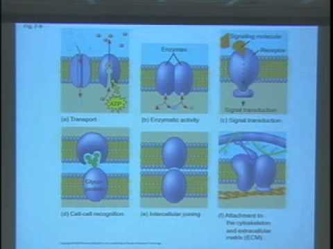 Saylor BIO101a: The structure of biological membranes