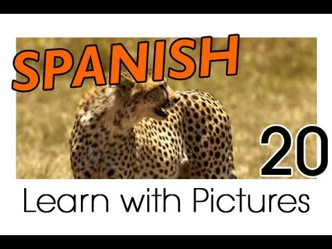 Learn Spanish - Spanish Safari Animals Vocabulary