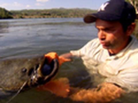 Attack of the Invasive Fish