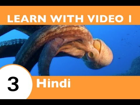 Learn Hindi with Video - HindiPod101 Will Help Keep You Afloat with Hindi Marine Life Vocabulary!