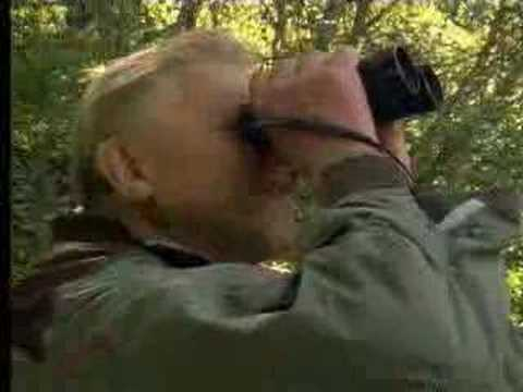 David Attenborough up close with exotic birds in New Zealand  - BBC wildlife