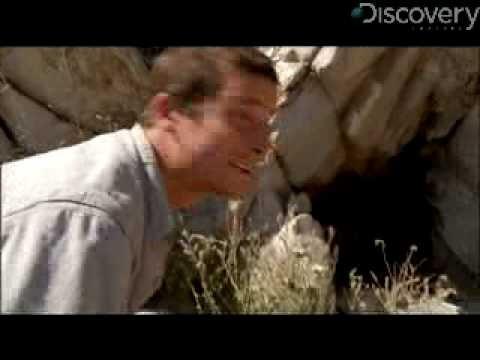 Man vs. Wild - Bears Love Honey