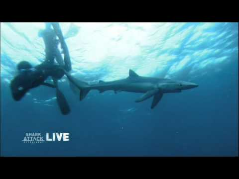 'Shark Attack Experiment LIVE'- Sharks Need Our Protection