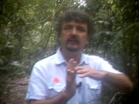 Climate Change: Tropical Rainforests