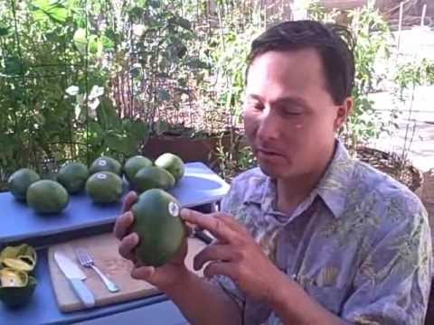 How to Eat a Mango Without Getting the Juice all over