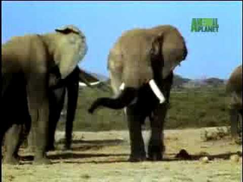 Fooled by Nature - Elephant Airheads