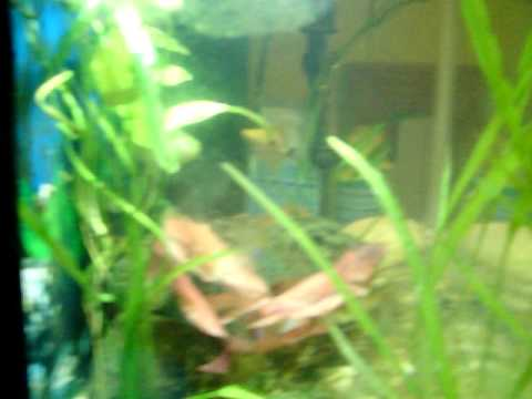 wayne's fish tank week four part 2