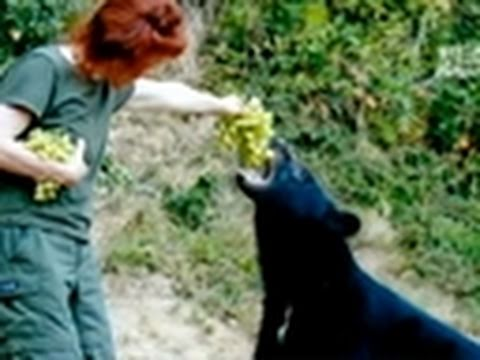Fatal Attractions: Feeding Bears by Hand