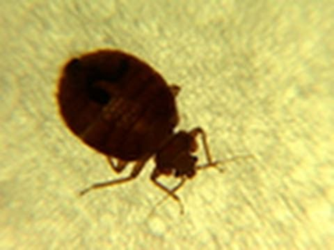 Don't Let the Bedbugs Bite!
