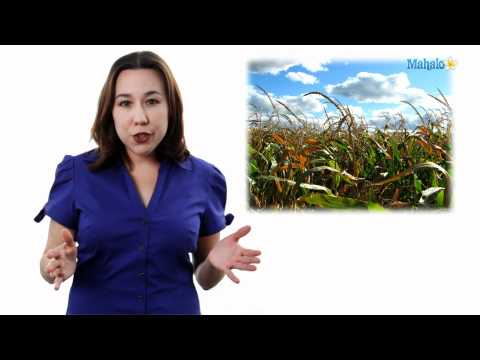 Learn Biology: Genetically Modified Organisms