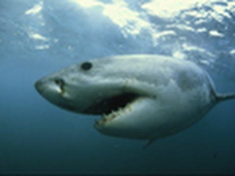 National Geographic Live! - Juliet Eilperin: Demon Fish
