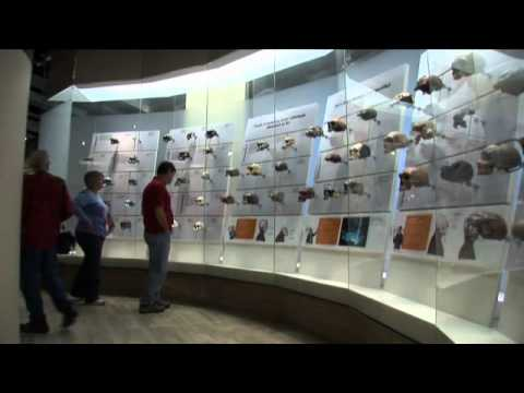 Human Origins Exhibition Introduction