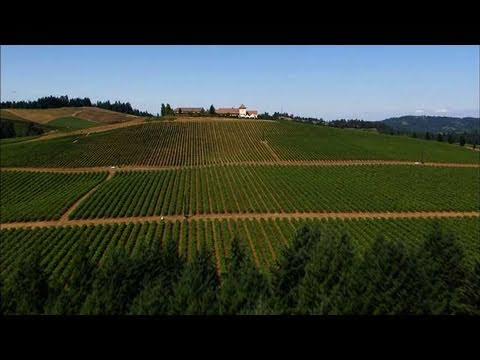 Aerial America - Wine Does Just Fine in Oregon