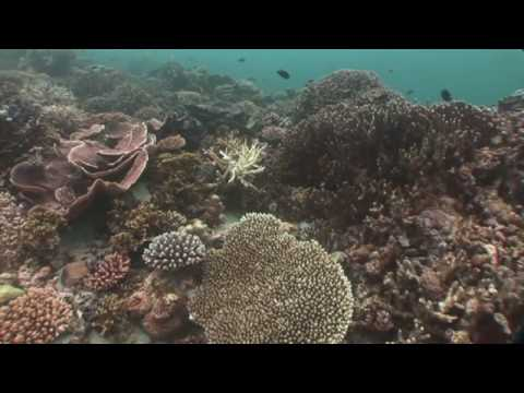 Maldives: Island Kingdom Under Siege