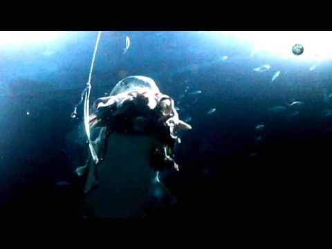 Shark Week - How Sharks Hunt | Tiger Sharks at Night