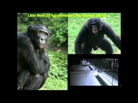 Brian Hare: Peaceful as a Bonobo?