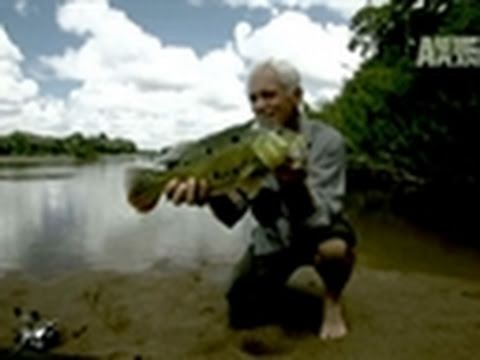 River Monsters- A Peacock Bass