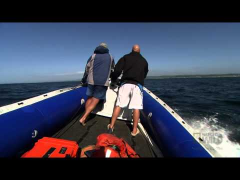 Filming in Shark Bait