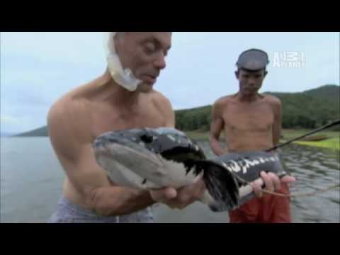 River Monsters- Castration by Fish?
