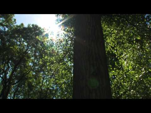 Video Plant Profile with Jon Peter — Cottonwood