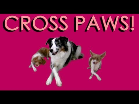 Cross Paws- dog tricks- how to train