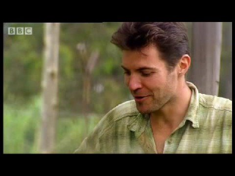 Attacked by an African lion - Steve Leonard - My Life with Animals: BBC wildlife