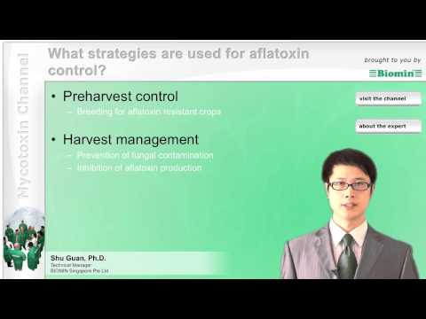 What strategies are used for aflatoxin control?