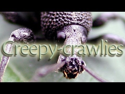 Creepy-Crawlies | Learn English | Interesting!