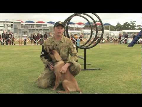 Military Working Dogs at the Clipsal 500