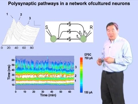 Mu-ming Poo Part 4: How Neural Circuits Learn Time Intervals