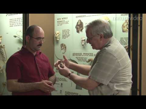 A piece in the monkey puzzle: by Nature Video