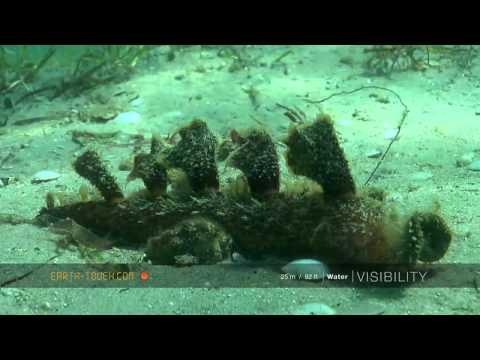Underwater treasure hunt in Mozambique