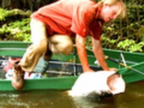 Wrestling a Colossal Fish