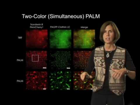 Jennifer Lippincott-Schwartz Part 3: Super Resolution Imaging