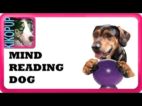 Mind Reading Dog!- clicker dog training