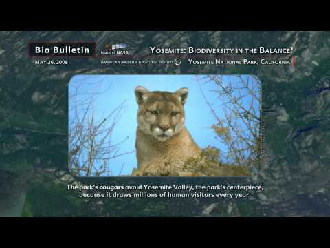 Science Bulletins: Yosemite—Biodiversity in the Balance?